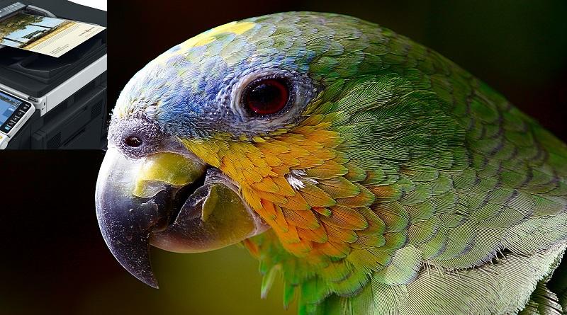 Renkli Fotokopi Kiralama
